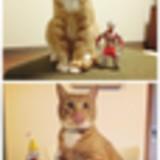 俺の飼ってる猫貼る