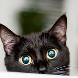 「イギリスでは、黒猫がインスタ映えしないという理由で捨てられている」