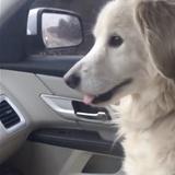 飼い主と死別し、施設で不安にしていた犬を引き取った帰り道。安心感からとった犬の行動に涙