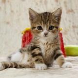 ネットで譲り受けた子猫を虐待し、死体の写真を譲り主に送りつけた鬼畜無職