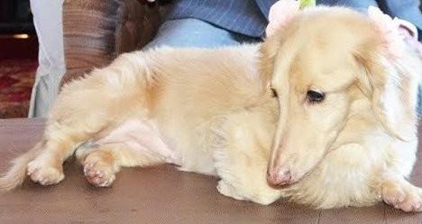 紀州のドン・ファン怪死 愛犬イブから覚せい剤反応か いよいよ殺人事件へ:コメント8