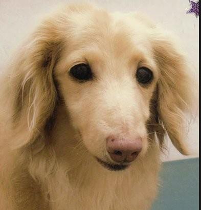 紀州のドン・ファン怪死 愛犬イブから覚せい剤反応か いよいよ殺人事件へ:コメント9