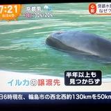 警官になった水族館のイルカペンギン取り残される
